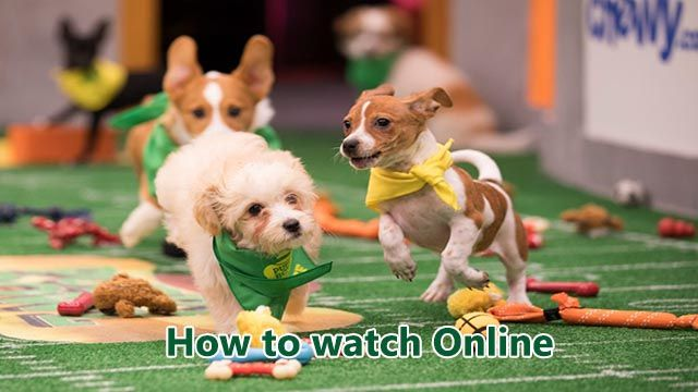puppy bowl 2019 live stream