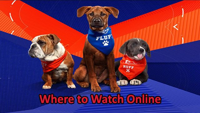 How to Watch Puppy Bowl 2020